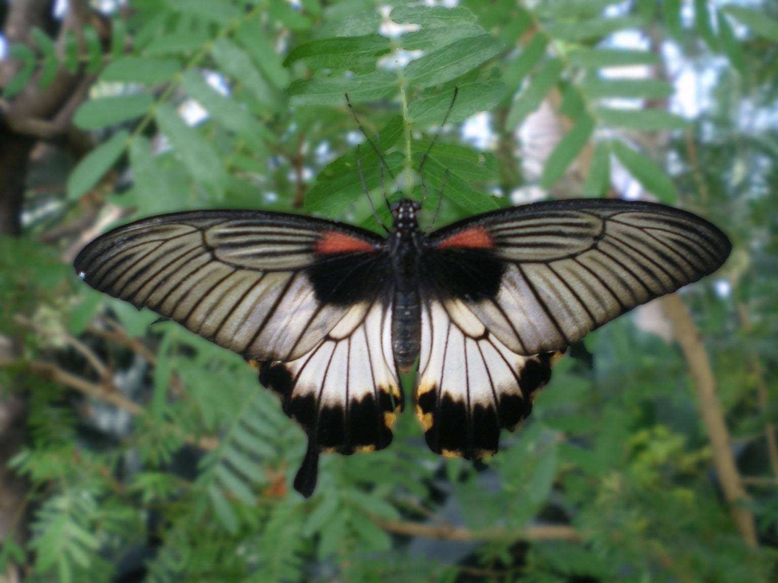 Butterfly_Conservatory