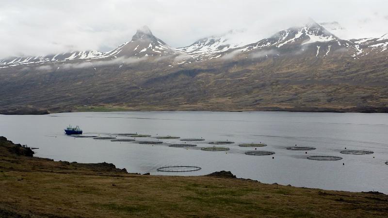 elevage_de_poisson_dans_un_fjord