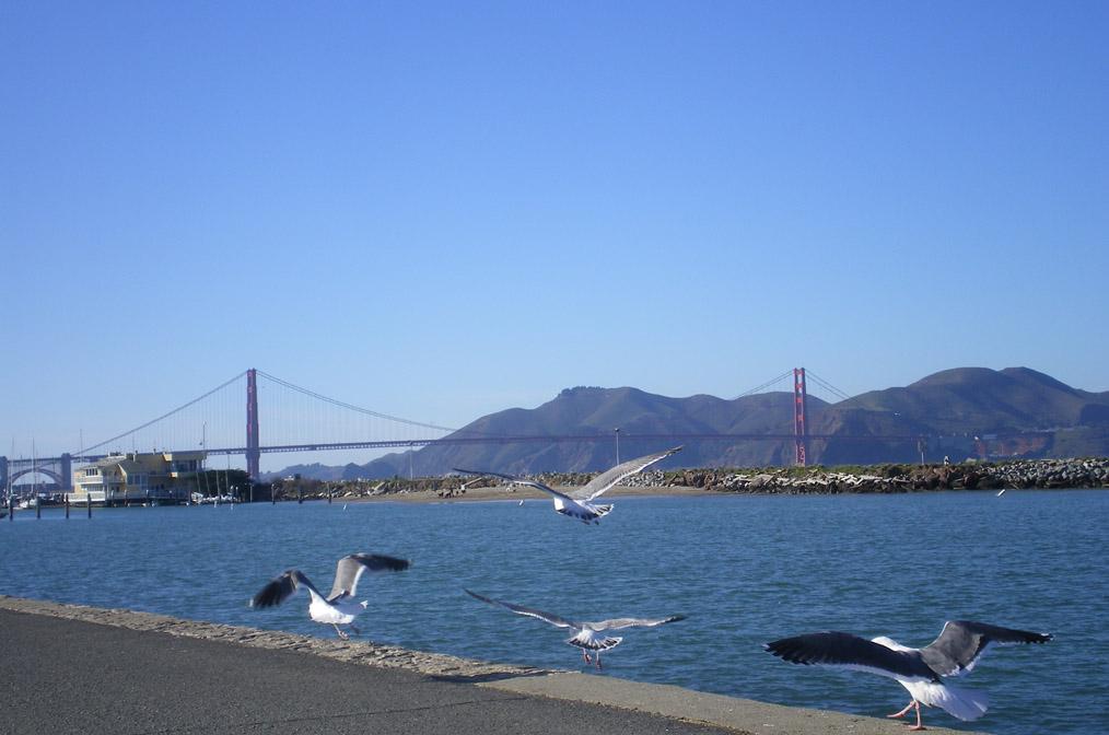 california(golden_bridge)