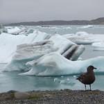 Iceberg de Jokulsarlon